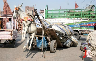 October 24: A donkey is hanging in the air due to his heavily loaded cart in Faisalabad.