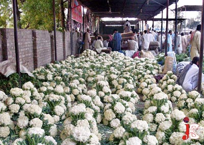 September 29: Cauliflowers are laying on ground for sale at Vegetable Market in Attock, Pakistan