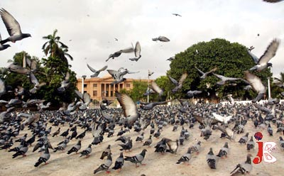 August 20: Seen This Before: A beautiful view of pigeons flying near High Court Chowrangi at Karachi